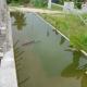 permulaan didalam  pembinaan kolam ikan koi